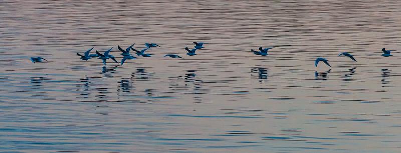 45/52-2: Seagulls