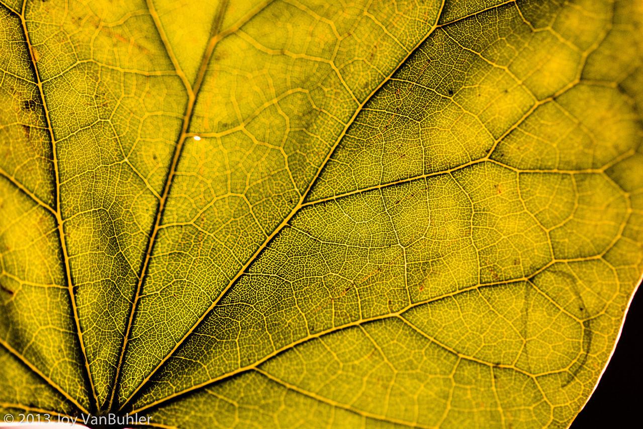 274/365 - Leaf