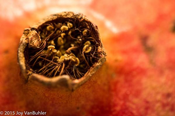 307/365 - Pomegranate