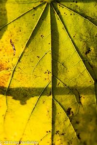 299/365 - Leaf