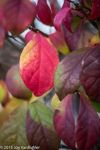 321/365 - Fall Leaves