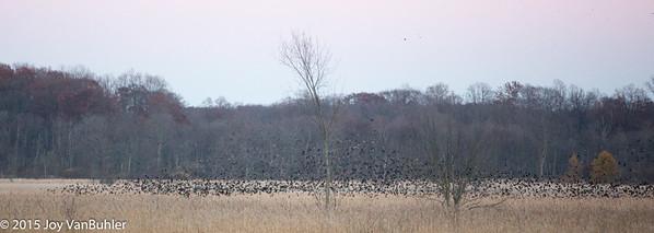 311/365 - Birds