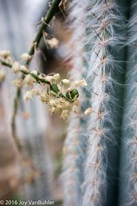 13/52-4: Cactus