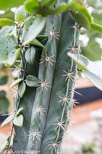 15/52-1: Cactus