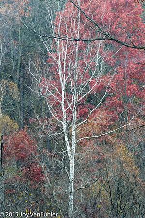 44/52-1: Fall Colors